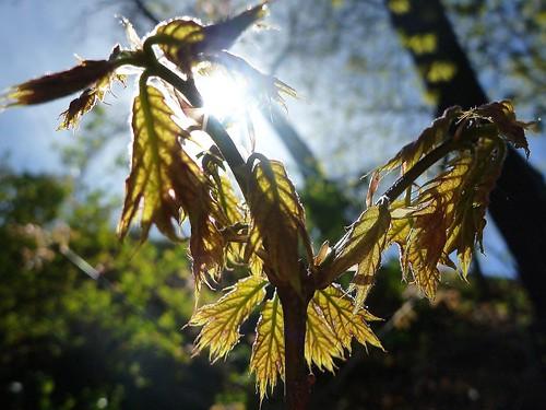 Leaves Spreading Wings
