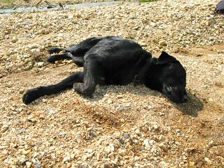 Tired Dog! | by OakleyOriginals
