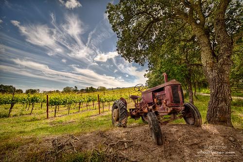 sky tree vineyard oak wine sonoma rusty wideangle winery winetasting grapes napa handheld oaktree hdr 3xp photomatix tophdr sigma1530mm canon5dmkii joeercoli anvilimage