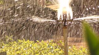 Sprinkler | by Tavos Mata Machado