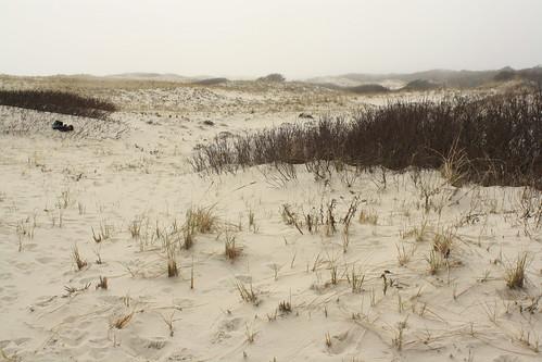 landscape newjersey oceancounty sanddunes islandbeachstatepark