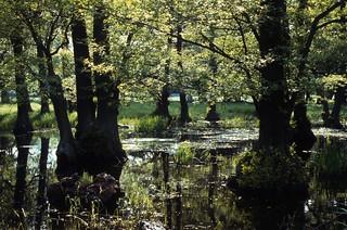 Dyrehaven wetlands
