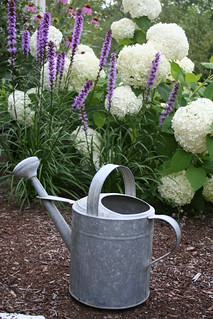 Watering can awaits | by Celeste Cota