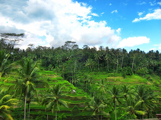 Tegallalang Rice Terrace | by tk78000u