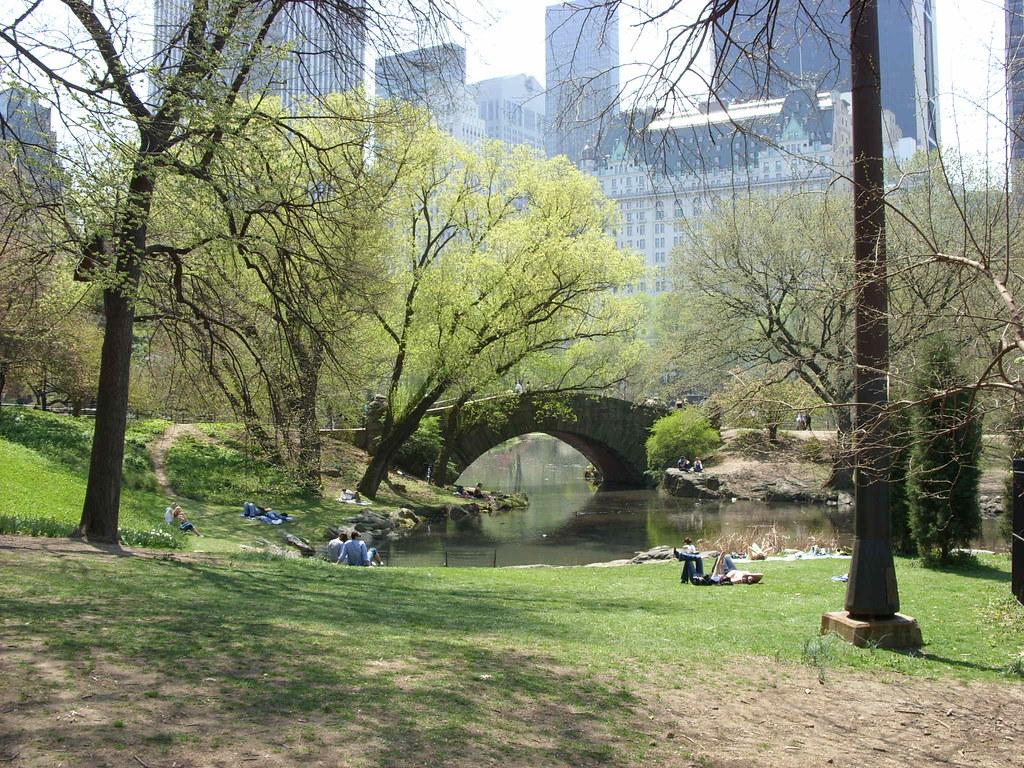 Black bird watcher in Central Park accused