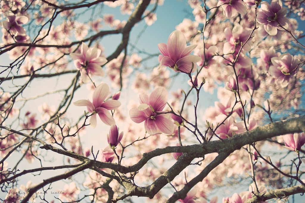 Spring by Frank Scallo
