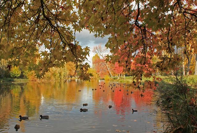 Canards de l'étang de Longchamp