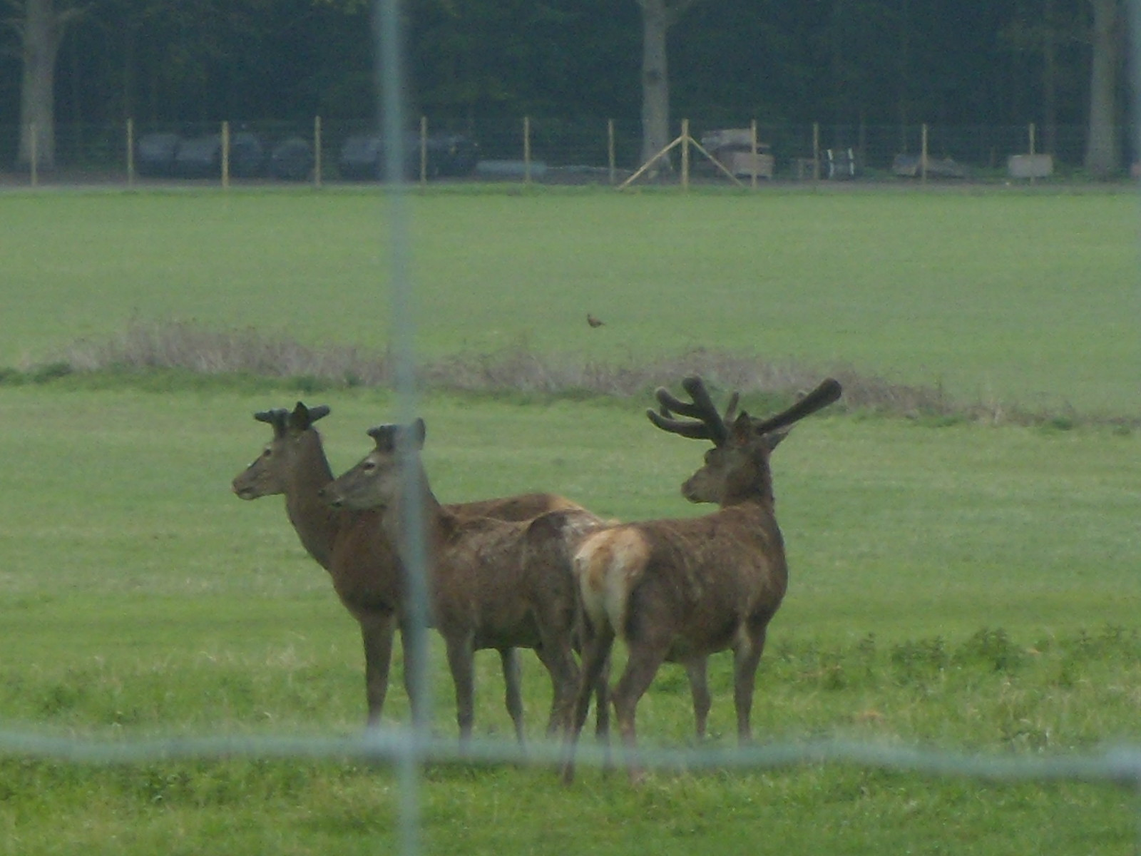Deer Not quite wildlife photographer of the year. These are captive farmed deer.Yalding to Borough Green
