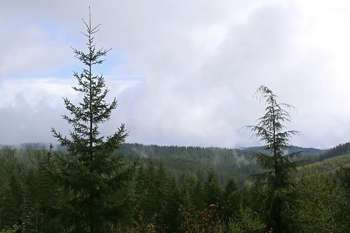 mountains tree oregon scenery overlook