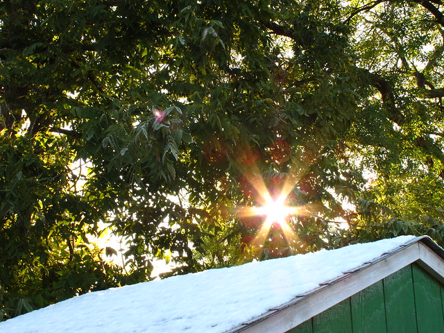 Houston Texas Winter Snow Snowy roof with the sun in the trees December 4 2009 during and after the snow fall   IMG_2237
