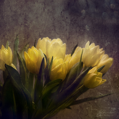 flowers stilllife yellow tulips bunchofflowers magicunicornverybest magicunicornmasterpiece