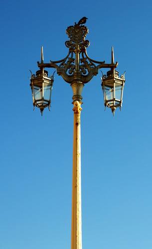 Bird on a Brighton lamppost | by Hexagoneye Photography