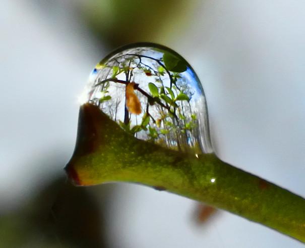 Through the eyes of a raindrop...