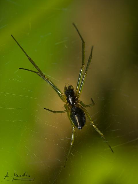 Araña en el jardín 3