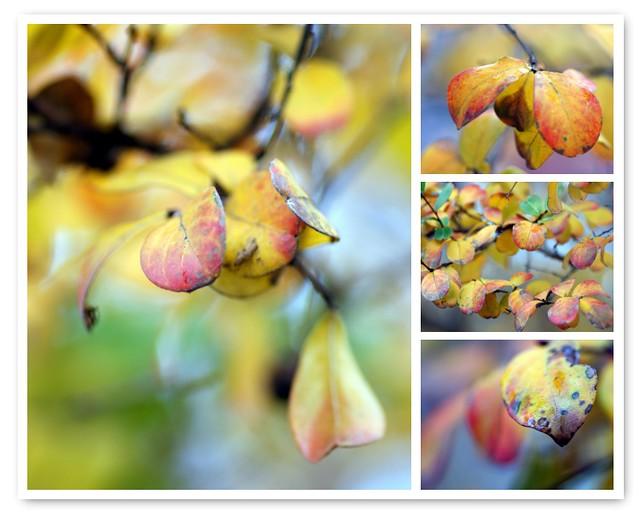 The crape myrtle in Autumn