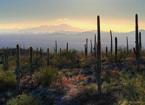sunset arizona landscape outdoors nikon desert scenic saguaro hdr arizonasonoradesertmuseum sanorandesert sonaradesert
