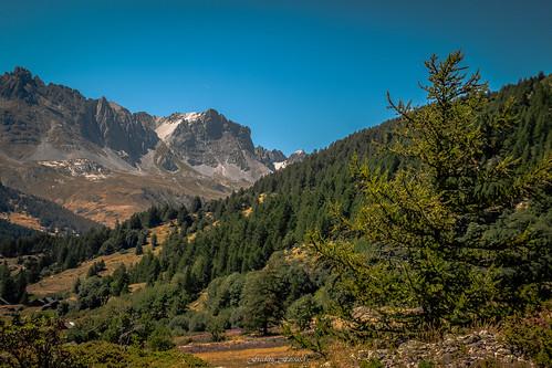 forêt sapin conifère épicéa mélèze hautesalpes italie france névache clarée plaine vallée vallon sommetduguiau estive cime crête nature