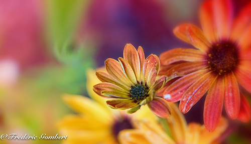 happy life | by frederic.gombert