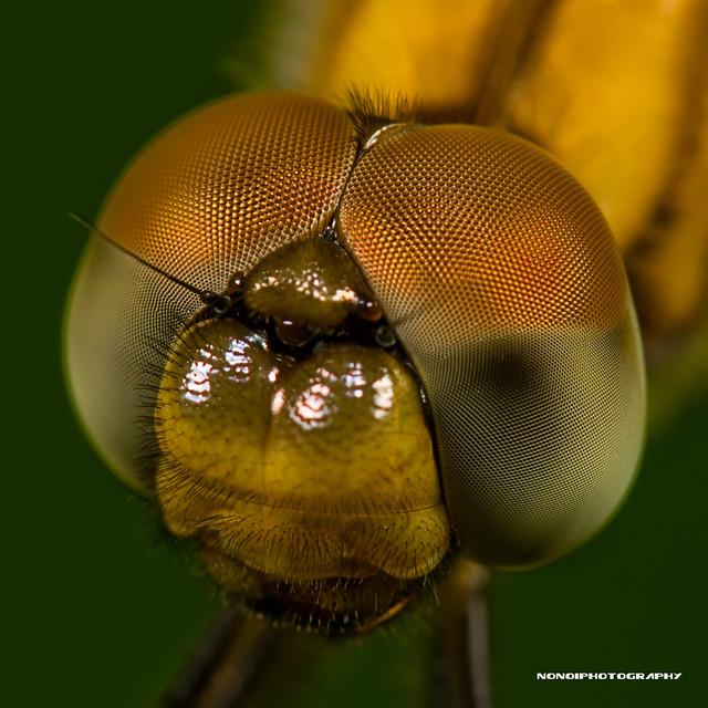 multifaceted eyes