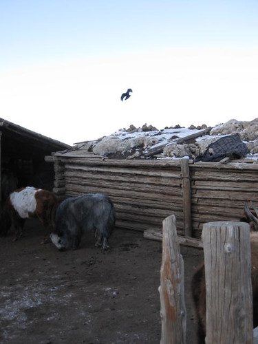 Birds scavenge for dead livestock | by East Asia & Pacific on the rise - Blog