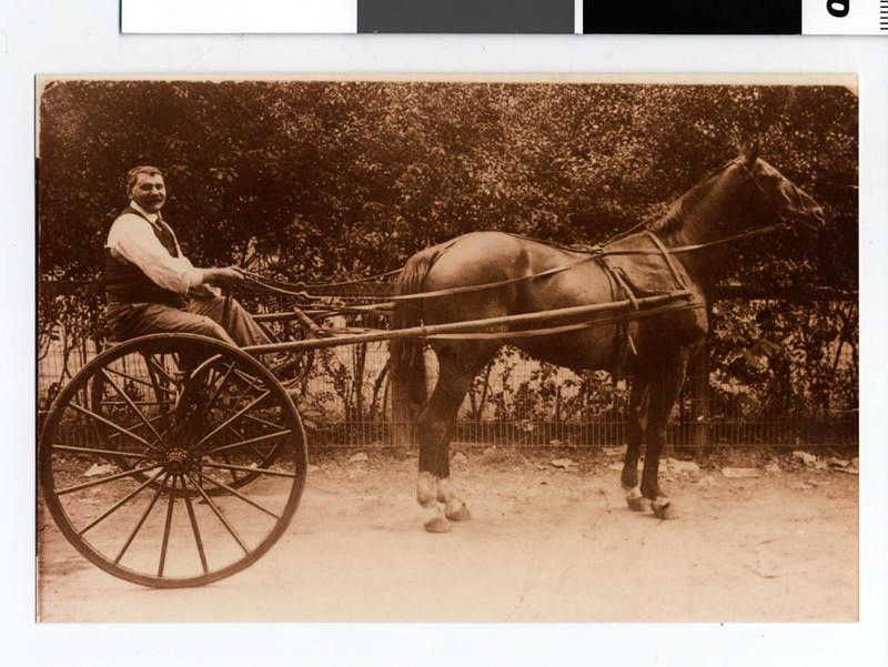 スタンダードブレッド - Horse Scanner
