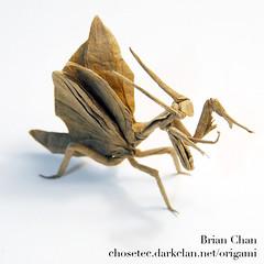 Flying Mantis Origami | by Chosetec