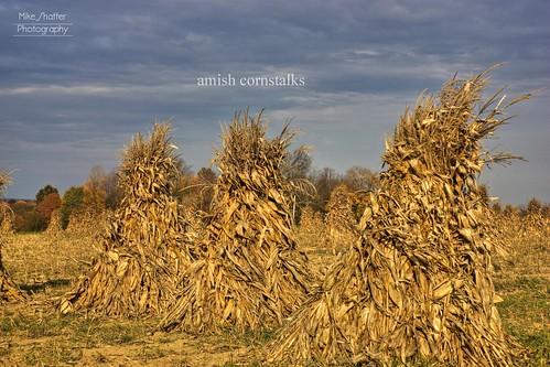 autumn fall field clouds corn pennsylvania sunday harvest amish pa stalk hdr cornstalk newwilington