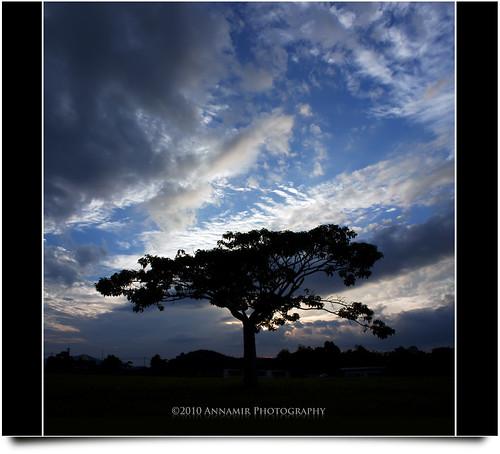 sunset silhouette clouds canon eos stitch dramatic kitlens malaysia handheld silueta awan siluet merge pokok 500d dramaticcloud verto kkb vertorama treesdiestandingup annamir getokubicom tamanmillennium awanan