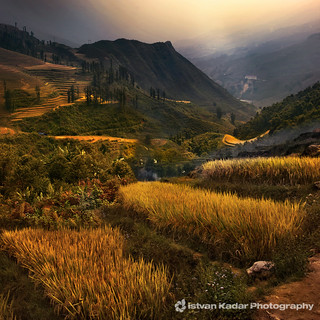 Golden Rice Terraces