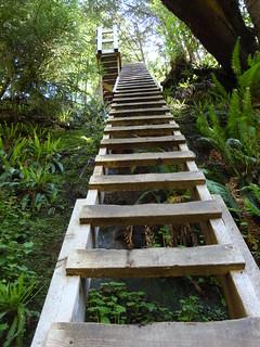 Ladder   by Su-Laine