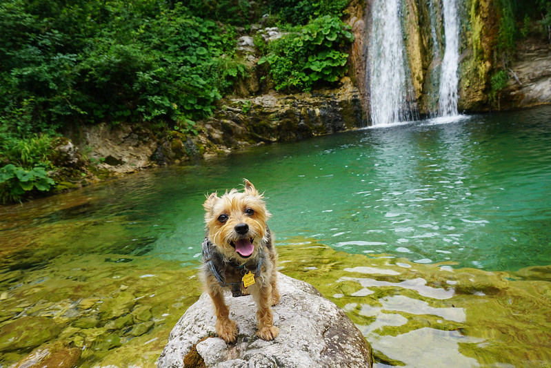 dog at a waterfall in Bosnia