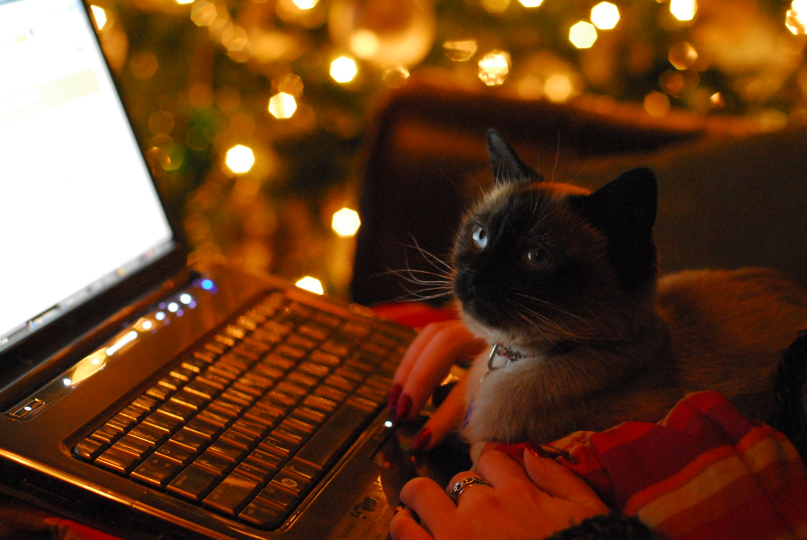 A Siamese cat sitting in front of an open laptop computer.
