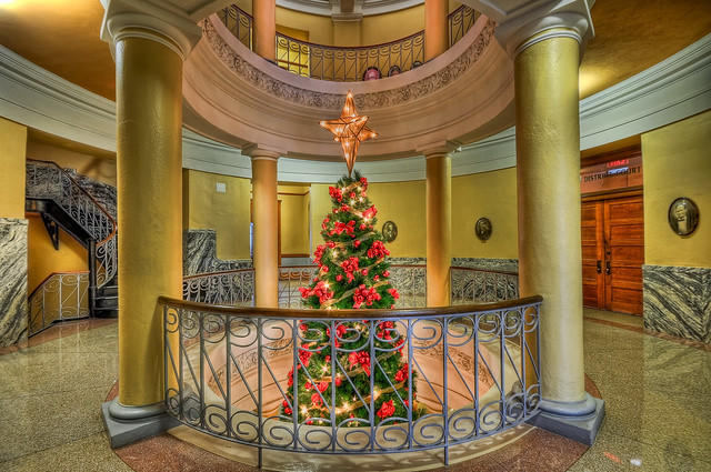 Williamson County Courthouse Tree
