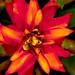Flower fr476