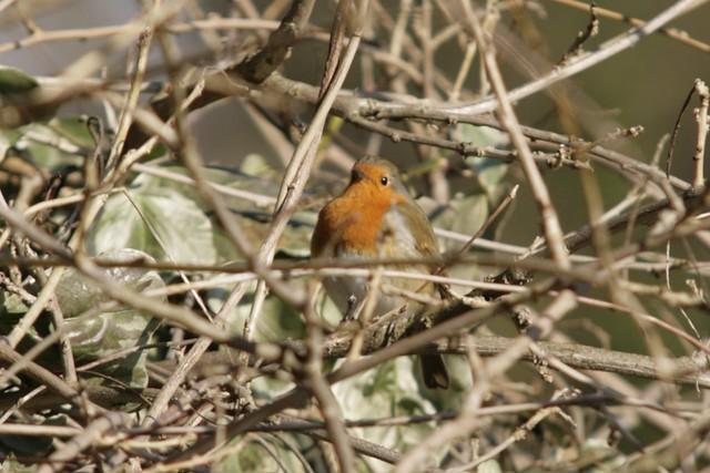 so sweet, a very proud little robin.