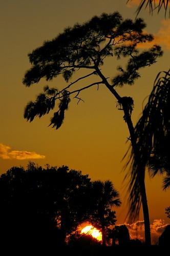 bartowfl lakesfloral pinesunset florallakesbentpine