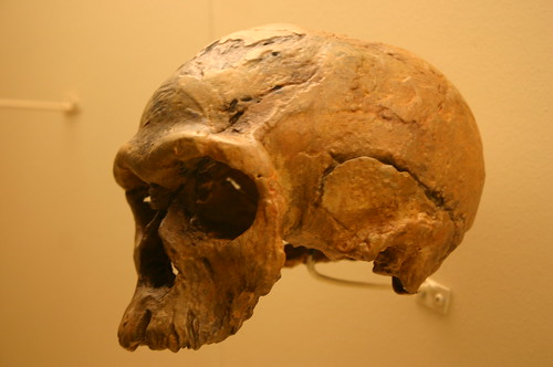 Homo Sapiens 160,000 Years Old