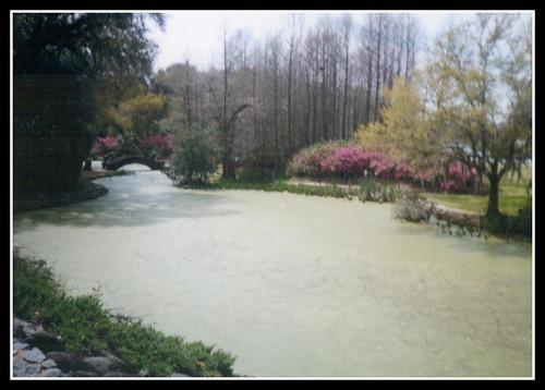 nature outdoors japanesegarden louisiana swamp marshland wetland junglegardens averyisland