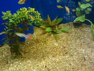 02/24/10 fish at Meijer | by angelle321