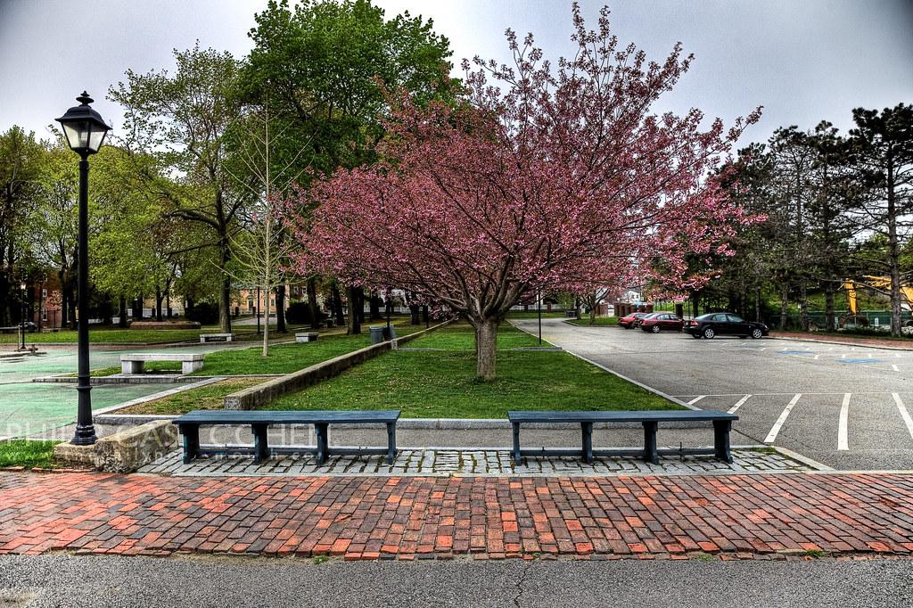 Prescott Park Tree by Philip Case Cohen