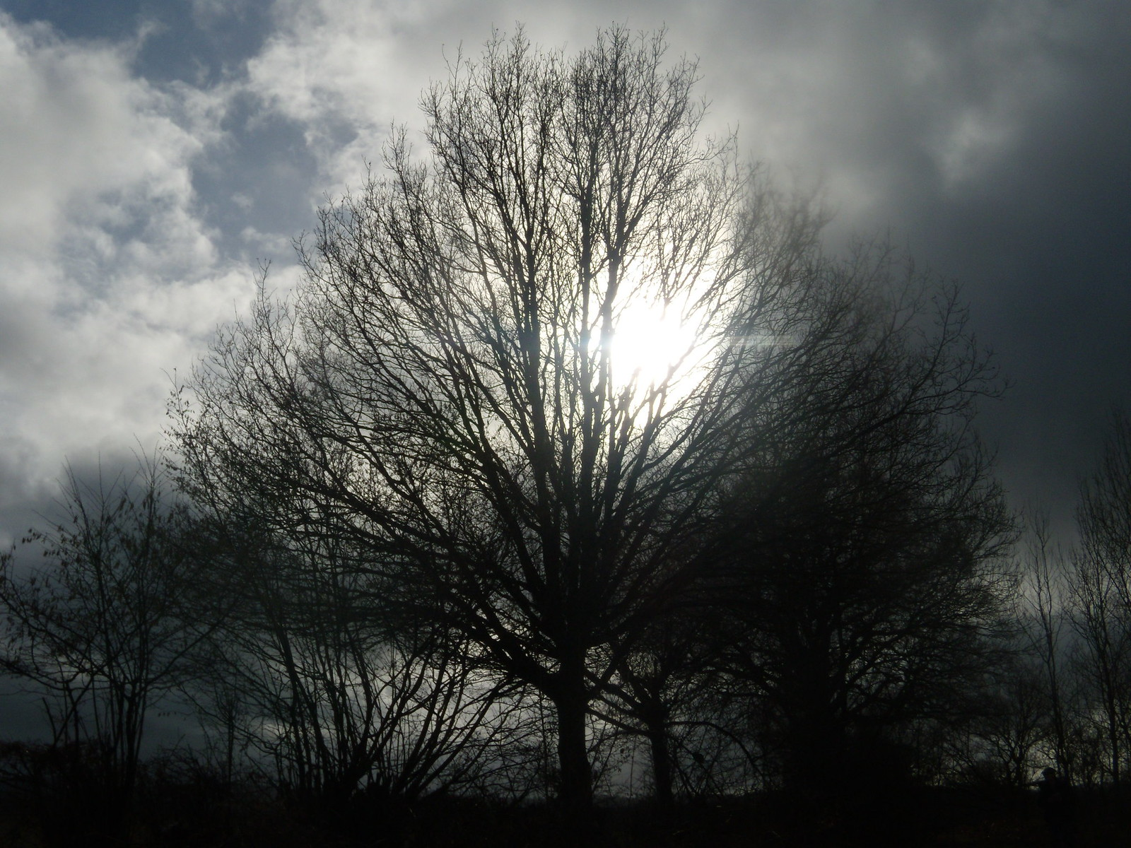 Sun through tree Witley to Haslemere