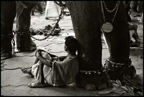 elephant chains kerala tired nameplate keralam mahout pooram thrissurpooram godsowncountry elephantfestival latenightshoot nikond80 padasaram paramekkavutemple anachamayam paramekkavubhagavathy midnightpooram tiredafteralonglongday elephantjewellery elephantdogtag gettyimagesindiaq4