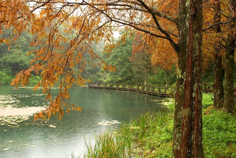 015-水生植物池-水杉-秋景-福山植物園