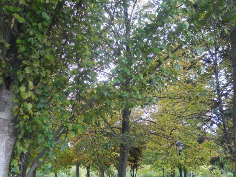 Árboles en otoño 11