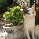 The Campos Garden 'Welcome Cat'