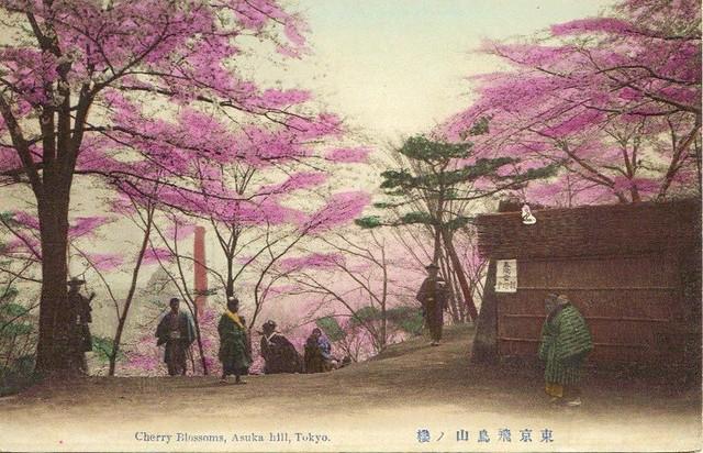 Tokyo- Asuka hill- Cherry Blossoms- vintage postcard- 18-12-2009 20;59;40