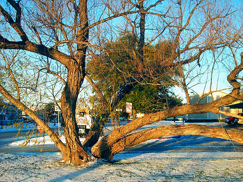 christmas snow tree sunrise texas mesquite northrichlandhills