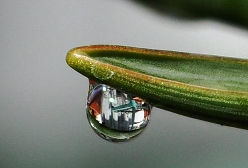 Dew drop close-ups #4