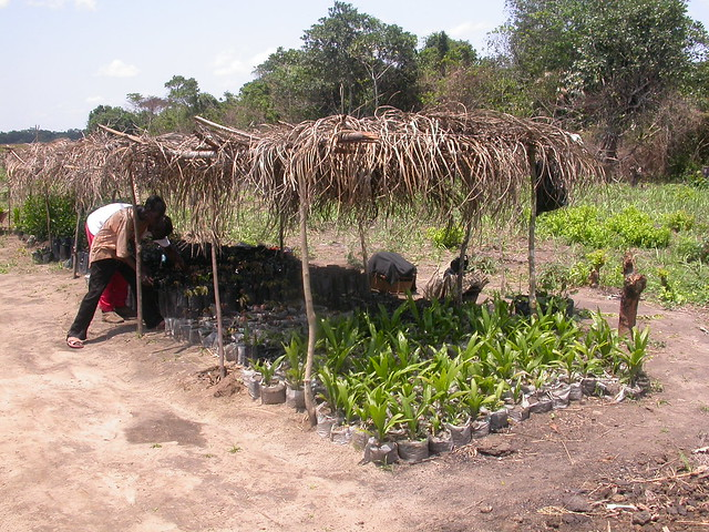 Ilyama association tree nursery