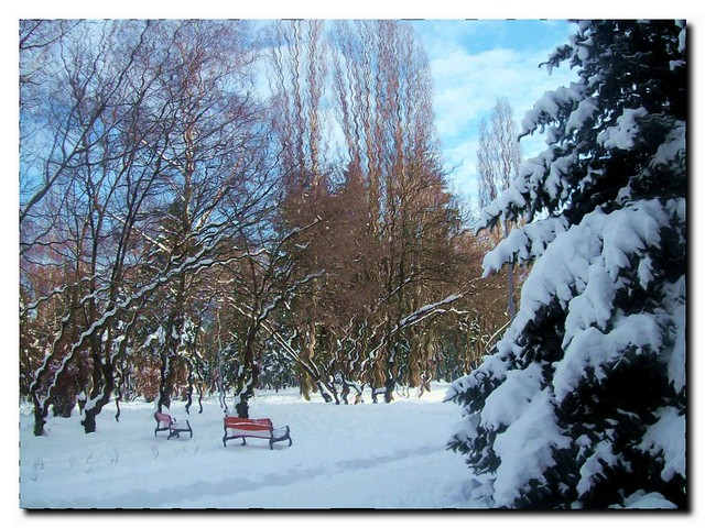 Park in winter-Budapest Erzsébet-liget